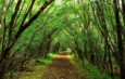 How to Write Evergreen Content that Will Last